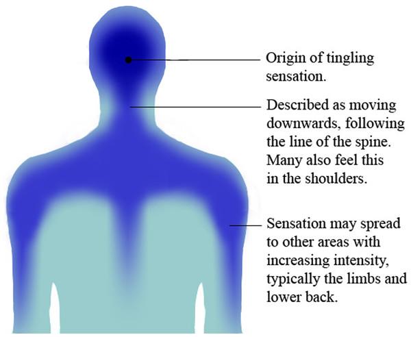 1) Orgine de la sensation de picotement 2) Elle descend le lond de la colonne vertébrale. On peut aussi la sentir dans les épaules. 3) La sensation peut se répandre dans d'autres parties du corps, notamment dans le bas du dos.